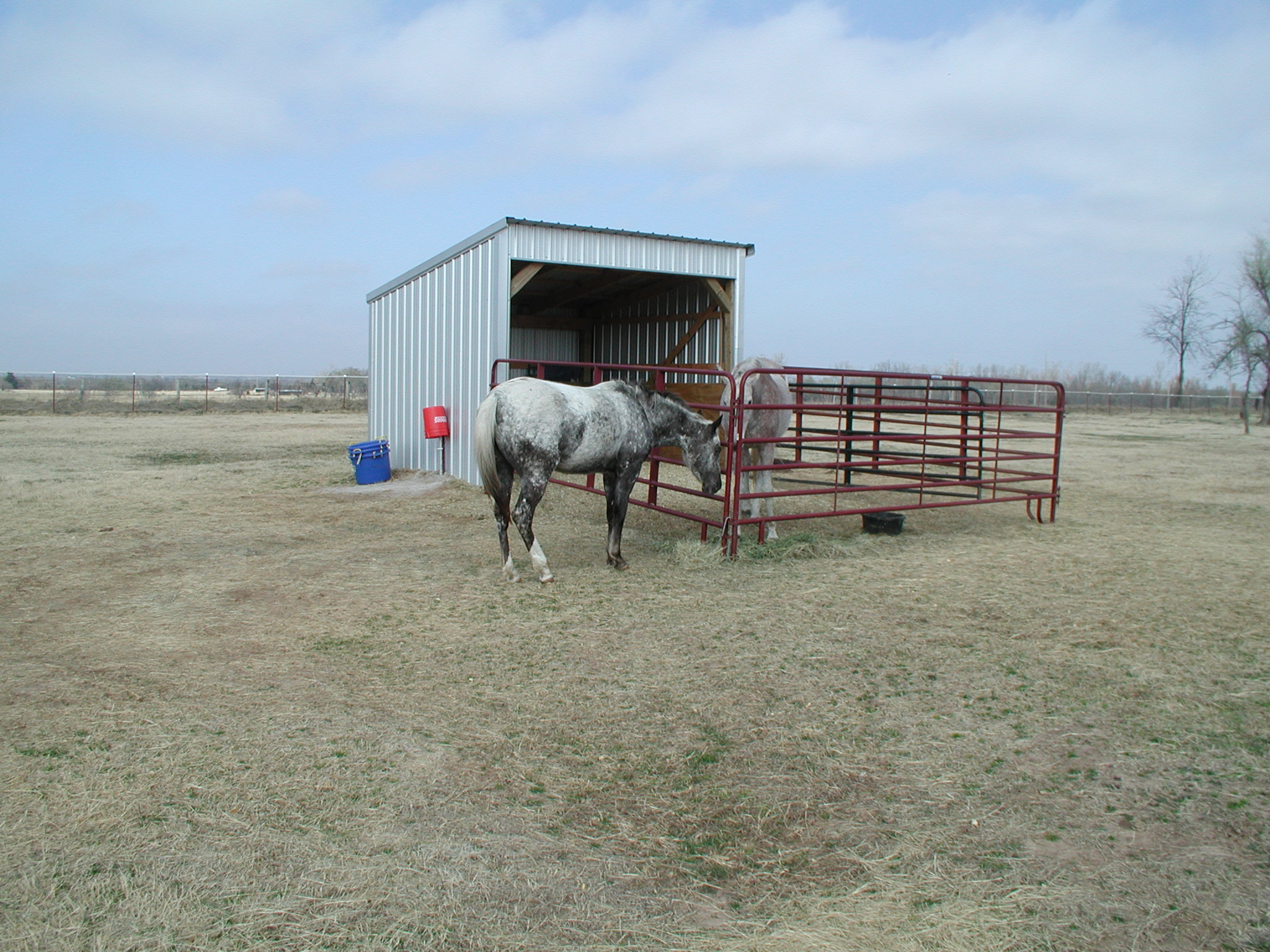 Download Shed Plans Horse Walk In Shed Plans