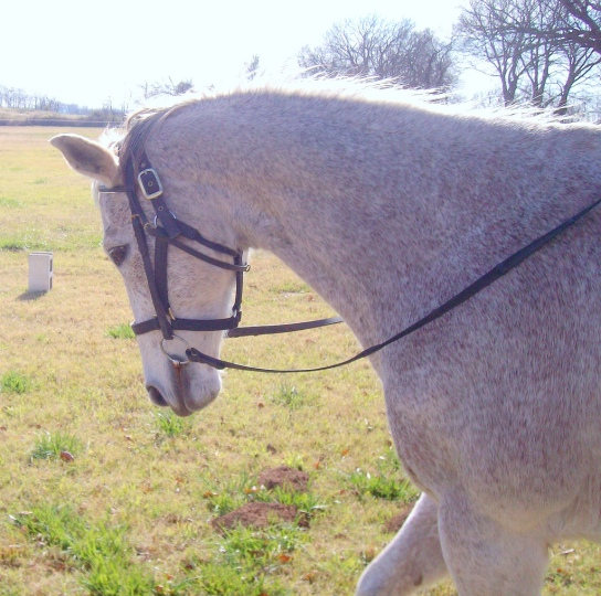 tristan_head_bridle