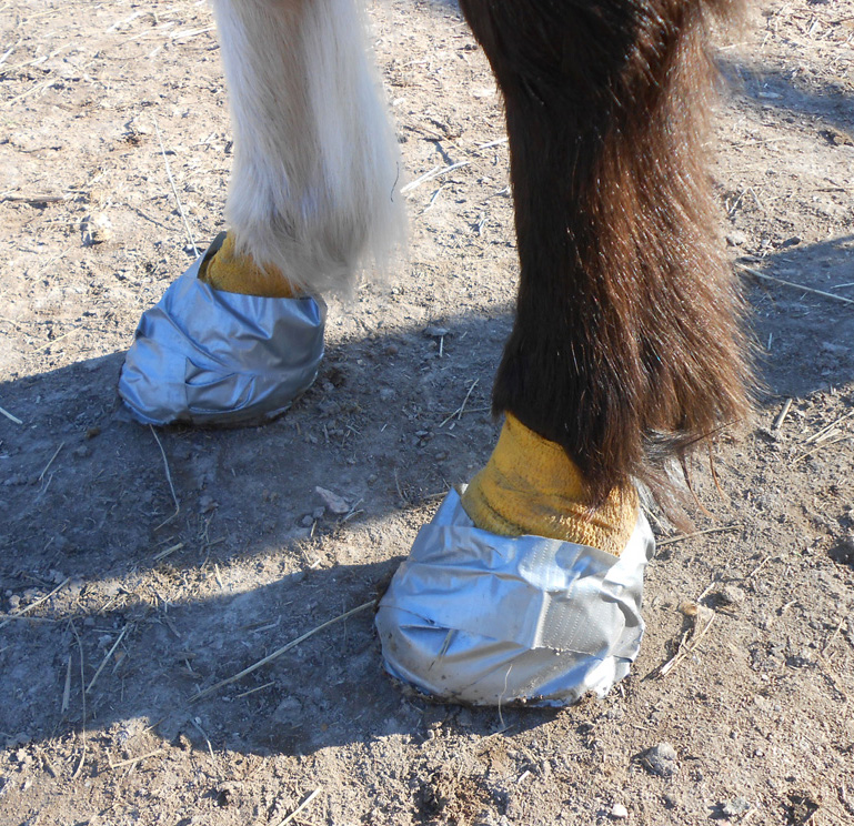 Horse Hoof Problems Abscess