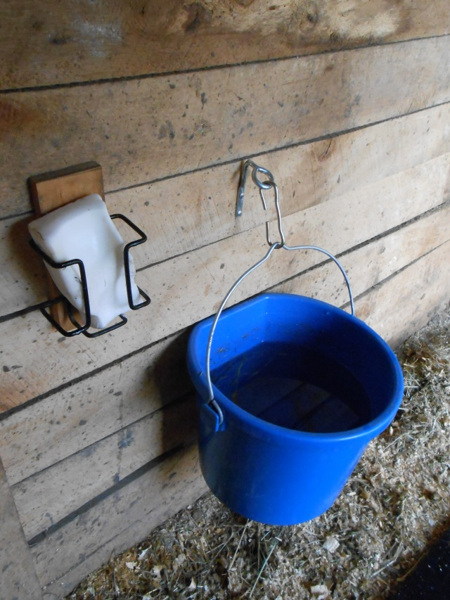 heated water bucket and salt block