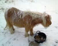Dulce_pony_March_2015c